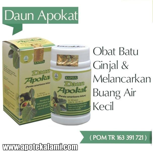 obat herbal daun apokat