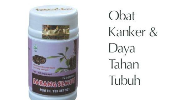 Obat Herbal Sarang Semut Mencegah Kanker