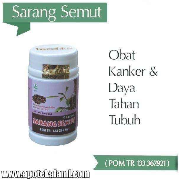 obat herbal sarang semut