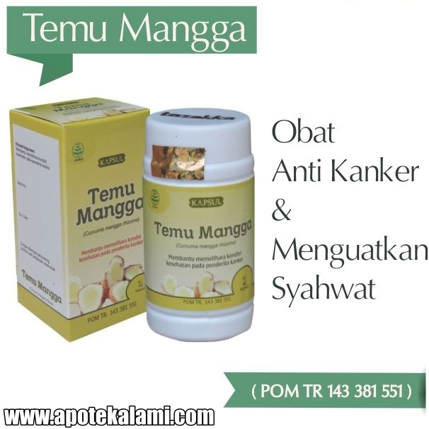 obat herbal temu mangga