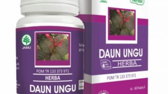 Obat Herbal Daun Ungu Mengobati Ambeien